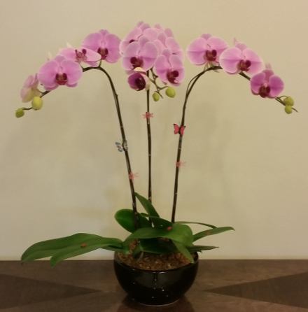 Welcome To Toh Orchids Singapore Orchid Grower Exporter And